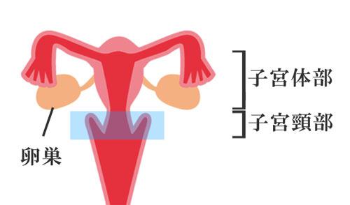 ん が 子 やりすぎ 宮頸 原因